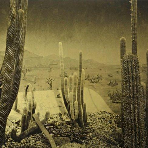 Image of DR Botanical Gardens