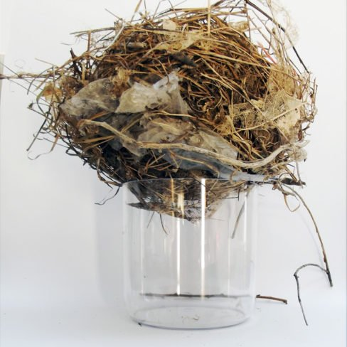 Image of DC 'Avian's weave'  Found nest